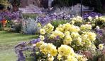 Какие травы выбрать для цветника: 4 идеи