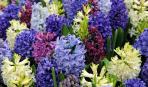 5 опасных цветов в саду