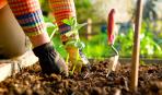 Что посадить в июне: советы дачникам
