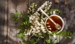 Акациевый мед: полезные свойства и особенности употребления
