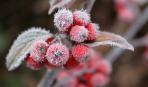 Морозостойкость растений: подробная таблица