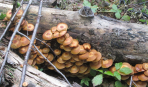 Как посадить грибы на даче: мастер-класс