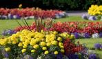 Как сделать клумбу непрерывного цветения: советы и схема