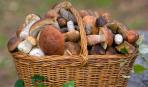 Лесные грибы на дачном участке