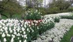 Лунный сад в белом цвете