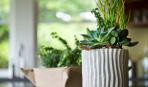 8 лучших растений для кухни