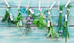 Лучшие пряные травы для сада