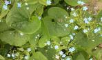 Теневыносливые и тенелюбивые растения