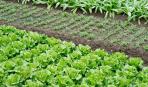 Разумное планирование огорода