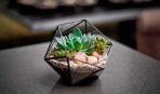 Сад в стекле: 10 необычных композиций