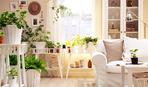 10 идей, как украсить интерьер вьющимися растениями