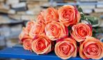 2 лучших метода размножения роз: буррито и отводки