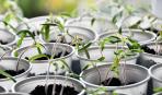Что сажать на рассаду в январе: советы специалистов