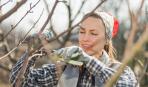Правила срезания черенков для прививки деревьев