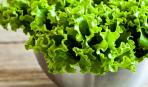 Огород на подоконнике: как вырастить салат