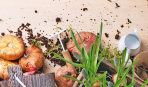 Как выбрать глубину для посадки луковичных (таблица)