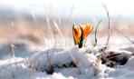 4 апреля - Праздник Василия Теплого: что нужно съесть натощак