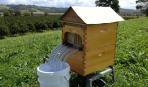 Австралійський вулик збирає мед самостійно