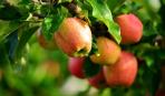 Выставка-ярмарка плодовых деревьев и кустарников-2018