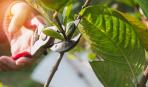 Как привить деревья весной: основные методы и схемы