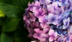 Эти 5 кустарников цветут все лето!