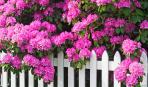 Эти 5 декоративных кустарников украсят тенистый сад