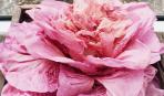 Знайомтеся, улюбленець блогерів - рожевий салат