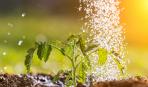 Этот чудо-раствор убережет огурцы и помидоры от болезней