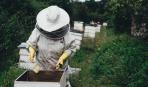 Пчеловодство для начинающих: полезные советы