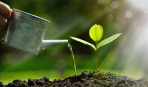 Особенности подкормки плодовых деревьев весной и летом