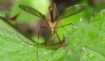 Стоп, комары: 11 трав, которые их отпугнут