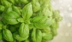 Блюда с базиликом: 5 лучших рецептов по версии SMAK.UA