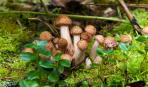 Варто знати: які гриби ростуть у червні