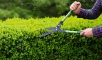 Правила обрезки декоративных кустарников, образующих корневую поросль