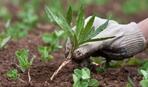 Огородный лайфхак: как превратить сорняки в удобрение