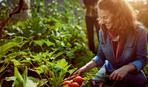 Роботи в саду, городі та квітнику в липні