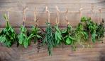 А вы сможете угадать лекарственное растение по фото? Тест
