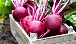 Чудо-корнеплод: невероятная польза свеклы для организма человека