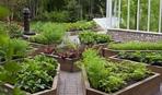 Боремся с тлей: рецепты опрыскиваний и советы от опытных садоводов